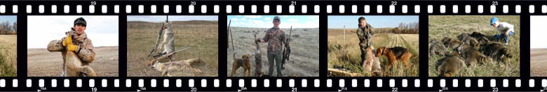 CoyoteHunter.net Filmstrip of Photos